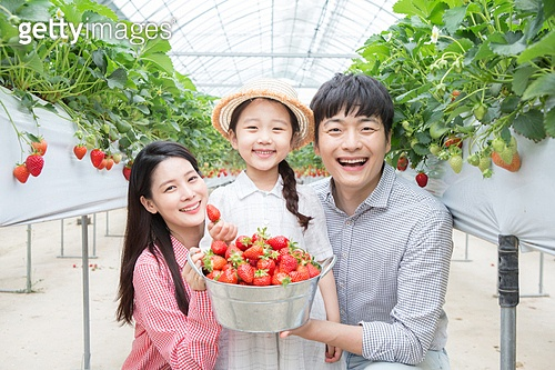 가족 딸기체험
