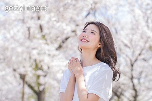 벚꽃 리프래쉬