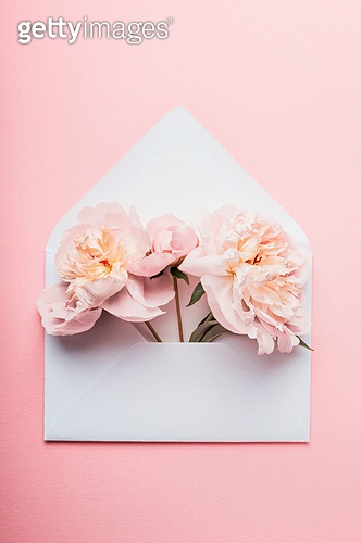 Opened envelope with Peonies flowers arrangements  on pink background, top view. Festive greeting concept