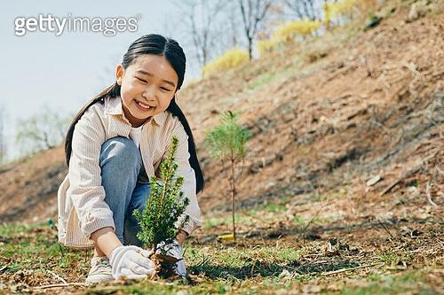 희망 나무 심기