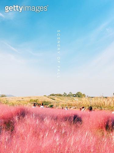 핑크빛 가을풍경