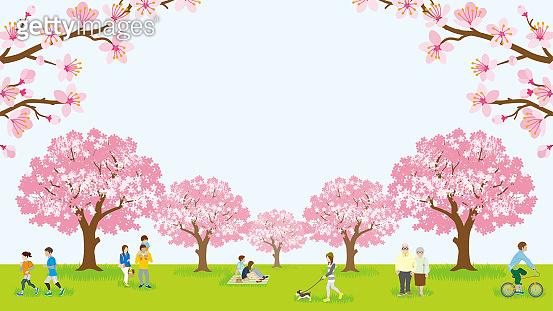 벚꽃 구경