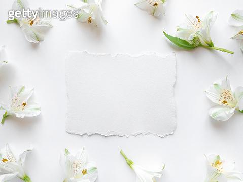 Fresh white flowers background