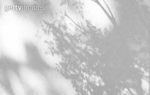 식물 그림자 백그라운드