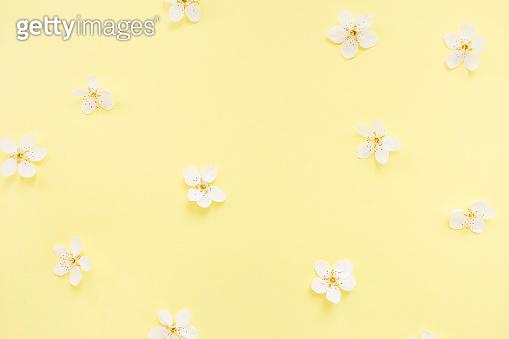 벚꽃 미니멀 백그라운드