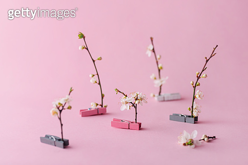 벚꽃나무 가지
