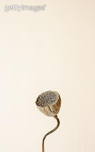 식물 미니멀 백그라운드
