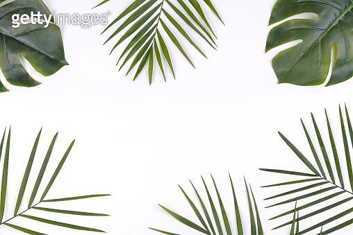 여름 컨셉 잎 백그라운드