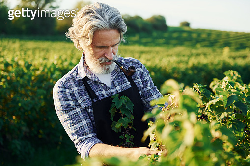 Man on the agricultural field