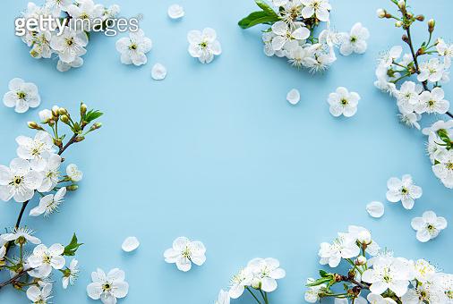 봄 꽃 백그라운드