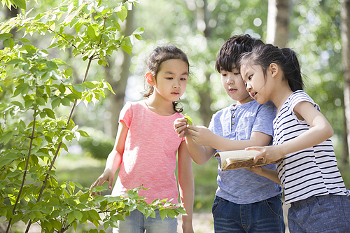 Happy children collecting sample of leaves in woods