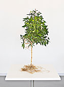 Small tree growing on tabletop