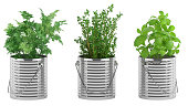 basil, thyme, parsley in the metal flower pots
