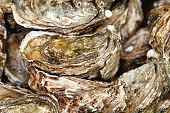 Fresh Oysters, Provence, France