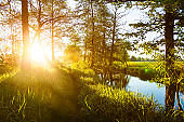 Beautiful summer morning