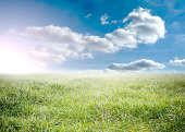 Beauitful green meadow