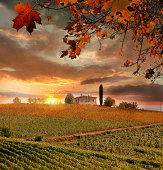 Chianti vineyard in Tuscany  Italy