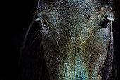 Glowing edge horse head
