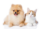 cat and spitz dog together