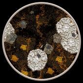 illustration of fungus