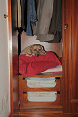 Dog in wardrobe