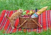 Little kitten sniffing the picnic basket