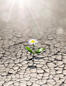 new life in arid land