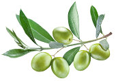 olive's branch with leaves and olives