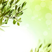 Olive oil border