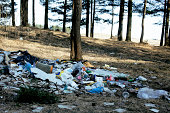 Garbage in forest, problems of environment