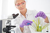 Female scientist taking sample from plant.
