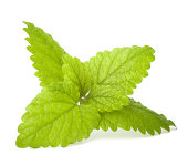 Peppermint or  mint bunch