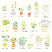 Herbs and spices set in pots with flowers