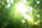 bokeh in sunny forest
