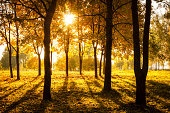 Sunset in Autumn Park. Fall Concept.