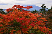 Autumn Colors in Northern Japan