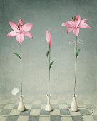 Three pink lily