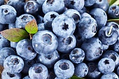 Ripe blueberries - food background.