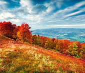 Colorfull autumn morning in the Carpathian mountains.