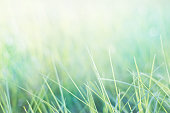 grass and natural green pastel background with selective focus
