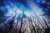 Multicolored northern lights (Aurora borealis) alone silouhette tree