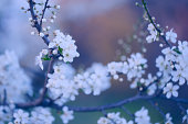 Vintage photo of tree flower