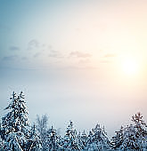 Sunrise Above The Winter Trees