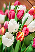 colorful tulips bouquet