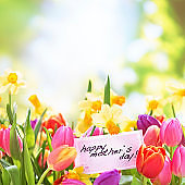 Colorful tulips  and daffodils with mothers day card in nature