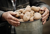 Potatoes in the hands of the farmer