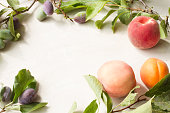 branch with plums peaches and apricots on a white background