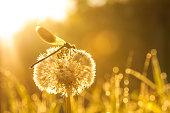 sunrise over a summer meadow