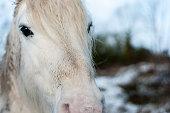 White horse eyes