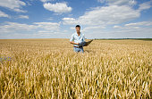 Farmer with laptop in wheat field